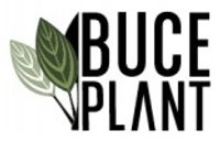 Buce Plant coupons